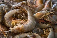 一只新鲜的虾的背景 库存图片