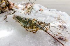 一只新鲜的龙虾 库存图片