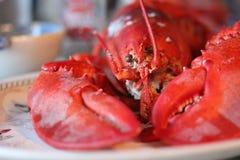 一只新鲜,煮熟的龙虾在缅因 库存照片