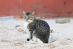 一只方便猫 免版税库存照片