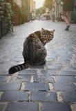 一只无家可归的猫坐街道 库存照片