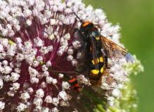 一只昆虫的宏观照片在植物的 图库摄影