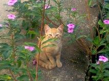 一只暗藏的猫! 免版税图库摄影