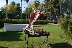 一只有点小羊羔,被烹调在热的灼烧的坚硬木头炭烬非常慢慢地喜欢manuka或蓝桉 库存图片