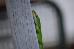 一只栖息的爬行动物 免版税库存照片