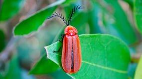 一只棕色昆虫在一片绿色叶子蹲 库存照片
