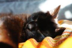 一只棕色猫在一条镶边毯子睡觉 猫接近面朝上 免版税库存照片