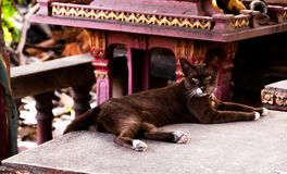 一只棕色猫的画象 免版税库存照片