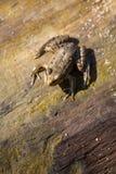 一只棕色青蛙坐树 免版税库存图片