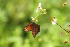 一只棕色蝴蝶的特写镜头 库存照片