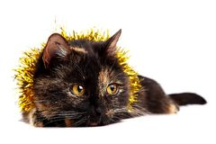 一只欢乐猫的纵向 图库摄影