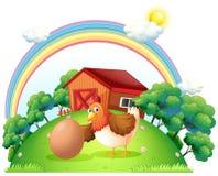 一只母鸡和一个鸡蛋在木房子附近 库存照片