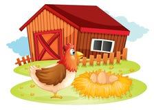 一只母鸡和她的鸡蛋在后院 免版税库存照片