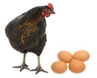 一只母鸡用鸡蛋 免版税库存图片