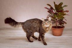 一只毛茸的猫在一棵红有叶的榕属旁边站立 库存照片