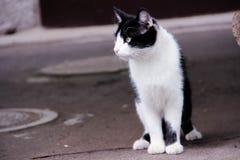一只沉思猫 库存图片