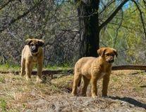一只流浪狗的小狗在一个孔旁边的在一个狂放的公园 免版税图库摄影