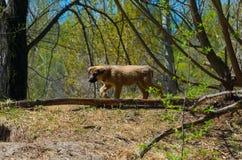 一只流浪狗的小狗在一个孔旁边的在一个狂放的公园 库存图片