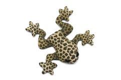 一只浅褐色的青蛙的一个被充塞的玩具与黑褐色斑点和补丁的 库存图片