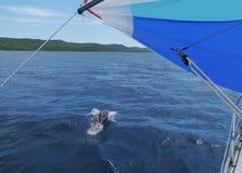 一只海豚在克罗地亚的亚得里亚海 免版税库存图片