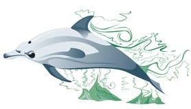 一只海豚在海 库存照片