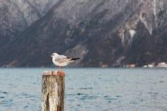 一只海鸥在冬天 免版税库存照片