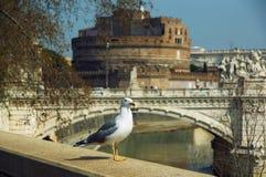 一只海鸥在栏杆花费反对台伯河圣徒安吉洛背景和castel  免版税库存照片