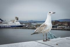 一只海鸥的特写镜头与港口的在背景中 免版税库存图片