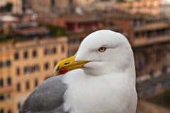 一只海鸥的画象在都市背景的 库存图片