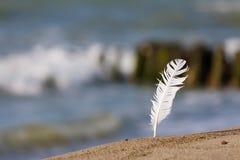 一只海鸥的羽毛反对海的 库存图片