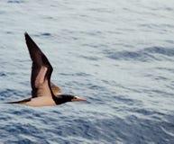 一只海鸥 图库摄影