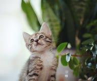 一只滑稽的小猫的画象在窗口植物附近的 免版税图库摄影