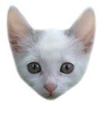 一只灰色和白色小猫的画象 免版税图库摄影