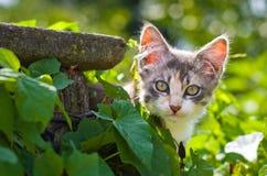 一只灰色小猫看在叶子外面 库存图片