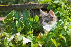 一只灰色小猫看在叶子外面 库存照片
