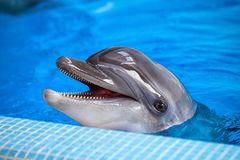 一只灰色海豚的特写镜头 库存照片