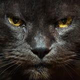 一只灰色猫的纵向 免版税库存图片