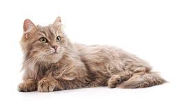 一只灰色猫 库存图片