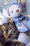 一只灰色红色猫和玩具熊在容忍坐 猫和熊朋友 库存照片
