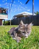 嗅花的虎斑猫 库存照片
