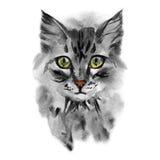 一只灰色逗人喜爱的猫的画象与黄色的上色了眼睛 库存图片