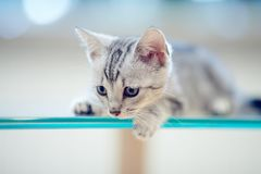 一只灰色镶边小猫的画象 免版税库存图片