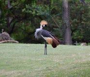 一只热带鸟在夏威夷 免版税库存图片