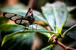 从一只热带蝴蝶的宏指令 免版税库存图片