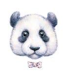 一只熊猫的水彩图画在白色背景的 库存图片