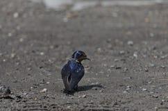 一只燕子做一个夏天 库存照片