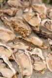 一只牡蛎的宏观图象在冰的 免版税库存照片