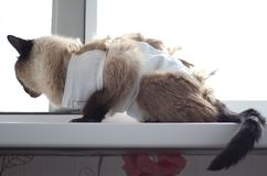 一只猫以癌症疾病在医疗毯子坐 库存图片