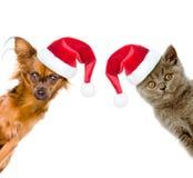 一只猫和一条狗的滑稽的画象在红色圣诞老人帽子 库存照片