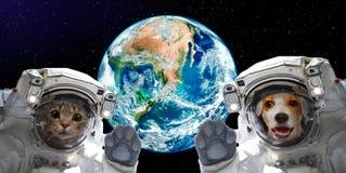 一只猫和狗宇航员的画象地球的背景的 免版税库存照片